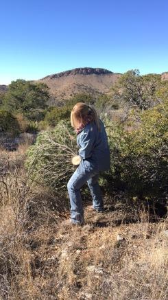 pulling tree
